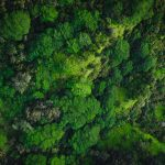 tree forest green